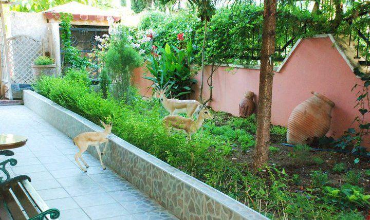 Lir Sanat-s Garden 155352 181577551859346 100000213072050 68