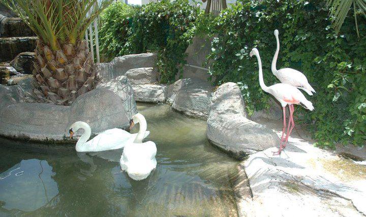 Lir Sanat-s Garden 63220 181578101859291 100000213072050 688