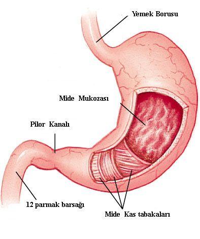 Gastrit ve ülser - mide hastalığının nedenleri ve semptomları